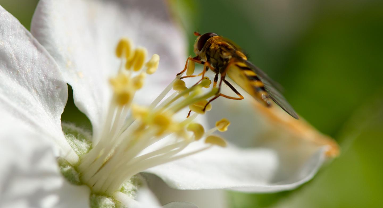 Bild:Die Natur lehrt uns sehr viel über Partnerschaften und Symbiose